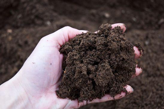 Dirt, Garden